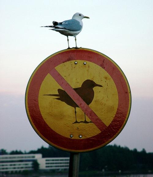 bird-on-no-birds-sign
